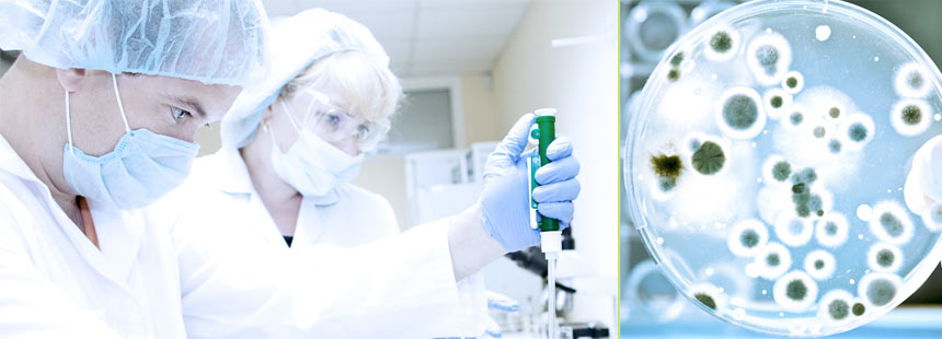 Поражение микроорганизмами материалов и методы защиты